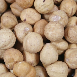 Hazelnuts half salted